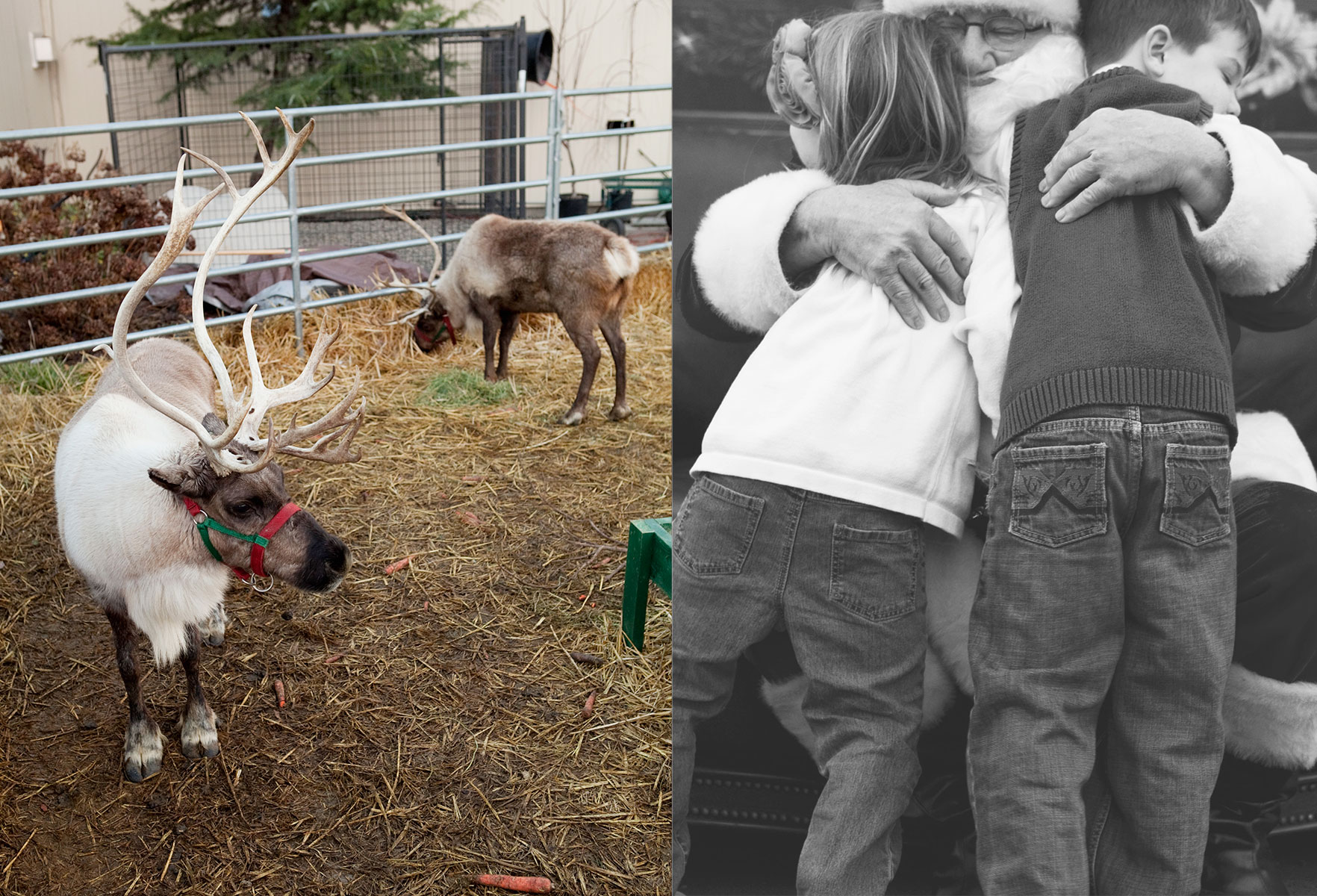Adored by Meghan's holiday traditions to start or continue with your family Santa and his Reindeer at Beaver Bark