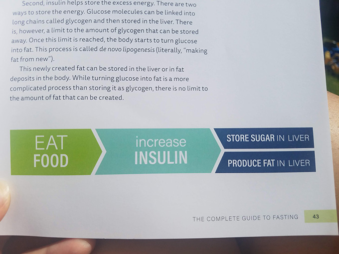 When you eat food, you increase your insulin, which stores sugar in your liver, which creates a fatty liver.